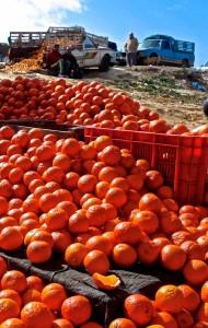 Oranges galore at the market