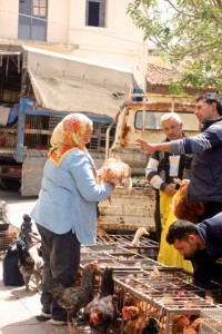 Haggling over a chicken in Tire