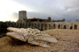 Fossilized shell uncovers the Roman arena