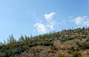 Yucca covered hillsides