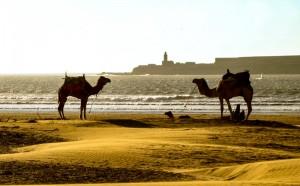 Camel ride anyone?