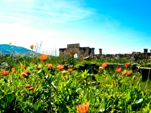 Spring flowers abound amongst the ruins in Volubilis