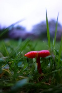 Lovely unidentified fungi in the middle of a stone circle in Kenmare