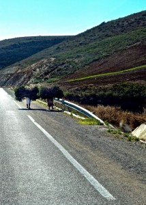 Girls carrying grass along the highway in the Rif Mountains